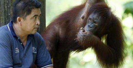 Apple orangotanghi usano iPad